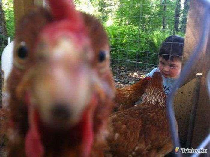 Фотобомбы з тваринами (25 фото)