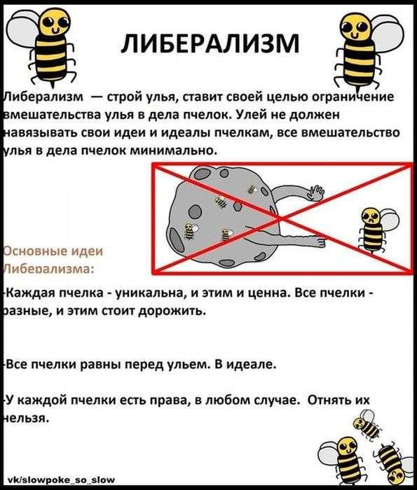Бджоли знають все про політику (19 фото)
