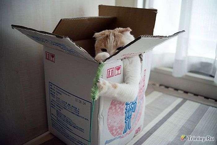 Коти не шукають легких шляхів (5 фото)