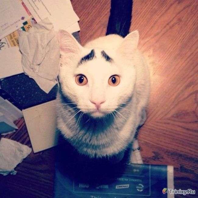 Коти, що стали інтернет-знаменитостями і мемами (6 фото + 1 відео)