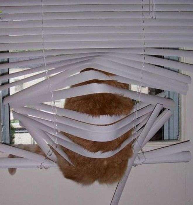 Коти ненавидять жалюзі (24 фото)
