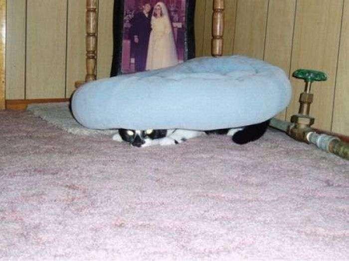 Коти люблять грати в хованки (39 фото)