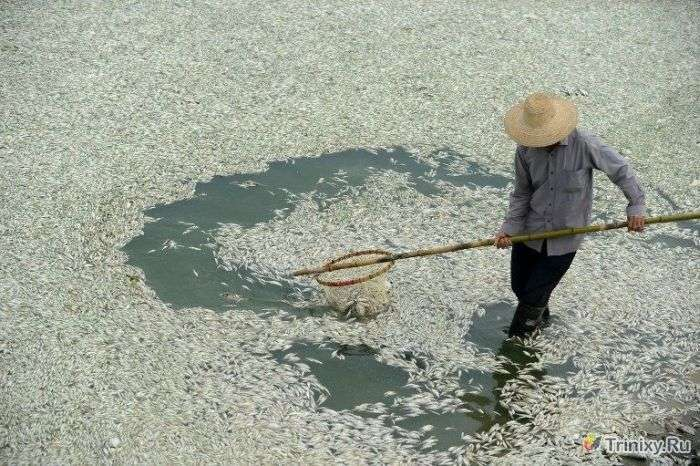 Скоро на прилавках з привітом з Китаю (9 фото)