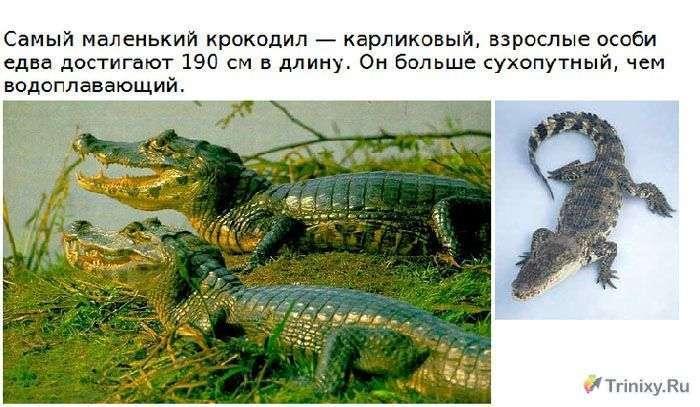 Цікаво про крокодилах (15 фото)