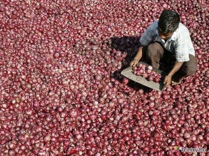 Пізнавальні факти про Індії (22 фото)