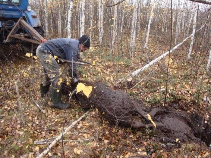 Несподівана знахідка на болоті в лісі (4 фото)