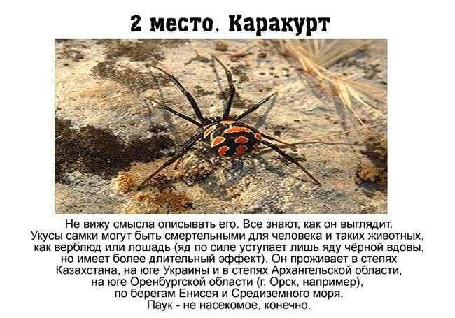 Топ-7 найбільш небезпечних комах, що мешкають в Росії (7 фото)