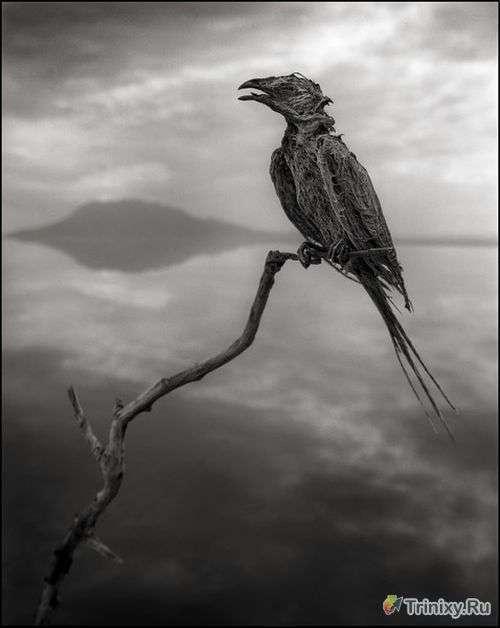 Озеро в Танзанії, яке перетворює тварин в камінь (7 фото)