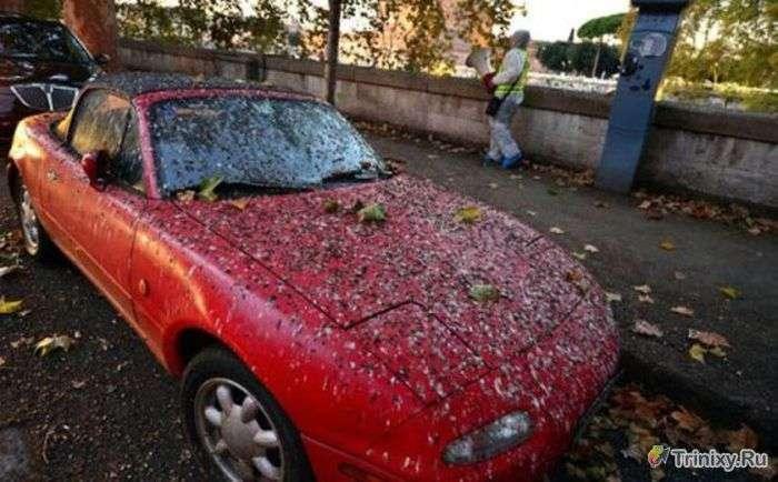 Курйози та дивні випадки на дорогах (39 фото)