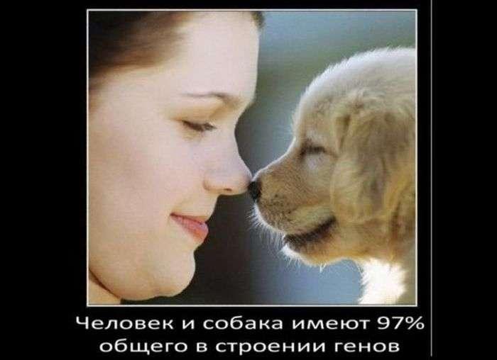 А чи знаєте ви: цікаві факти про собак (13 фото)