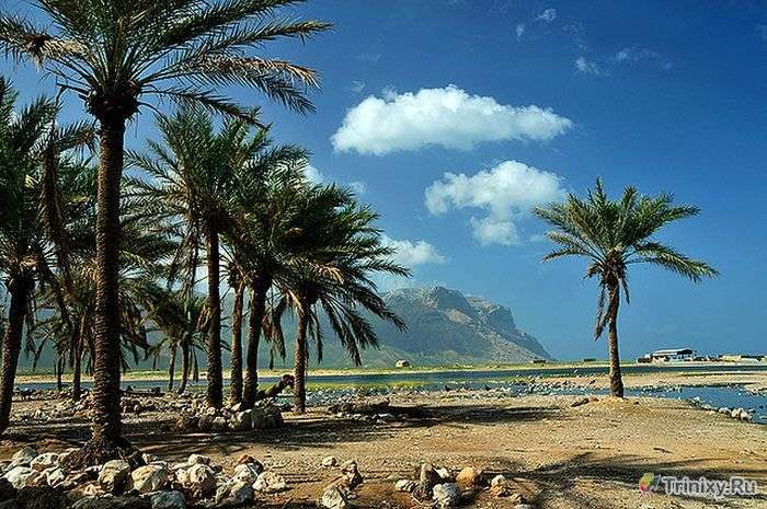 Дивовижний острів Сокотра (35 фото)
