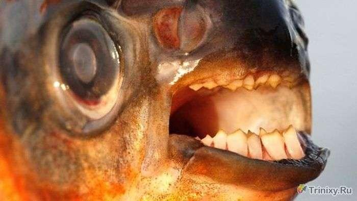ТОП-10 найбільш моторошних істот річки Амазонка (10 фото)