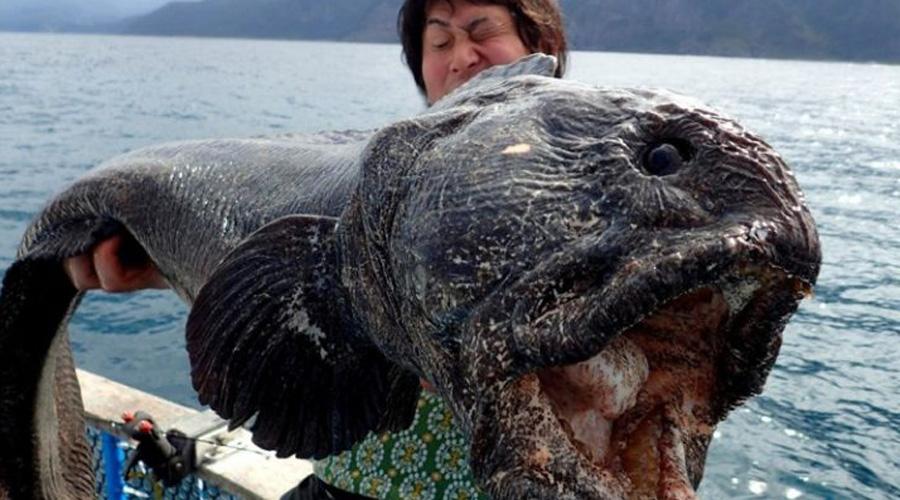 Страшный улов: дары моря, которые рыбаки боялись поднимать наверх акула